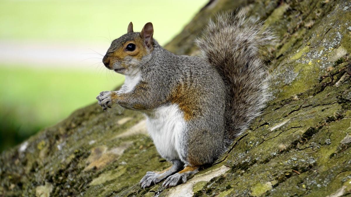 Hubs vs Squirrel – A HandymanStory